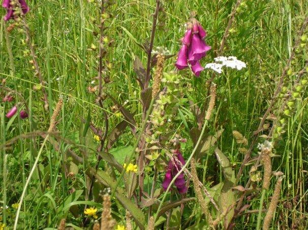 fleurs_steinbach
