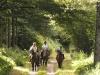 chevaux_deuquet
