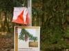 orienteering17